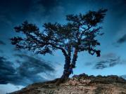 Shaman tree - Olkhon