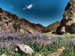 Coloured meadow - Yolyn Am