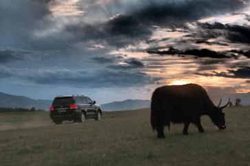The ox and the president's car - Terelj National Park