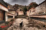 Dog - Phuntsoling Monastery