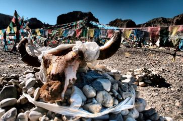 Yak skull and flags