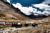 To Zutul Puk Monastery